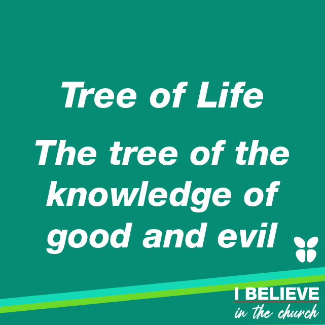 - Tree of life - The tree of the knowledge of good and evil
