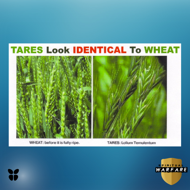 Wheat and Tares Side by Side
